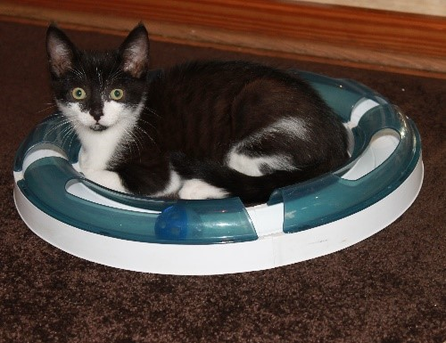 Boo – 7 months old, male, black and white.
